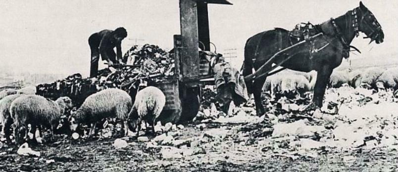Resultado de imagen para carro basurero tirado por caballo para juntar basura