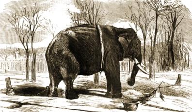 Elefante Pizarro 1873_small
