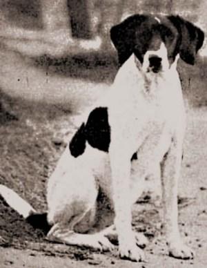 Silvela-Perro policia_1902